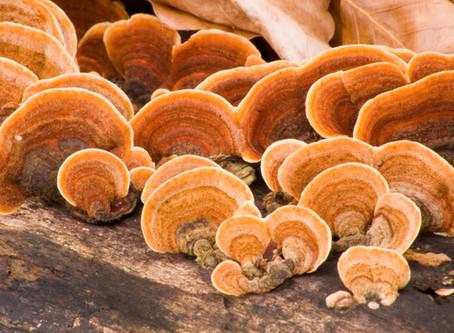 The Almighty Mushroom