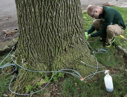 Landscaping Rockford