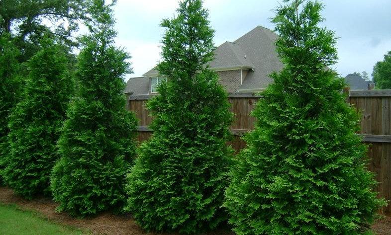 Tree Install Medium