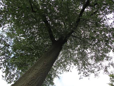 Tree Trimming Health Benefits