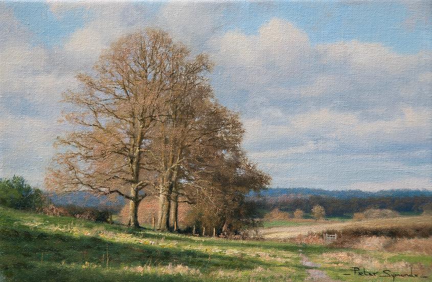 Near Peaslake, The Surrey Hills