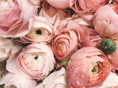 anniversary-beautiful-blooming-931177.jp