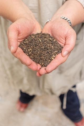 Lambke holding buckwheat