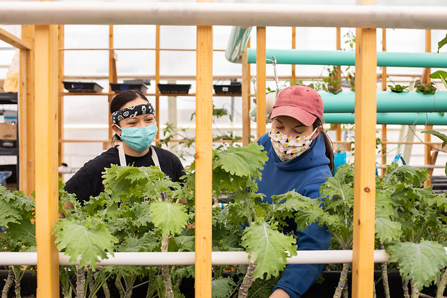 Undercover Farming at Canopy Farms