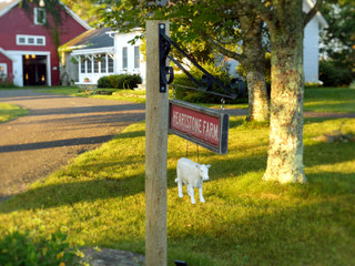 Visitors are always welcome at Heartstone Farm.
