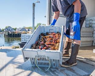 Maine Lobstermen's Community Alliance