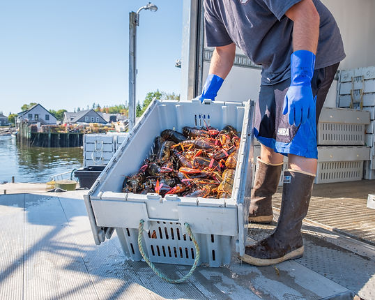 Maine Lobstermen's Community Alliance