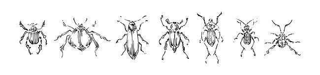 Pests in Your Summer Garden