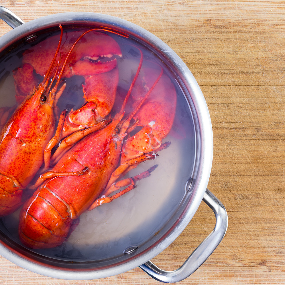 Savory Lobster, Fennel, and Saffron Broth