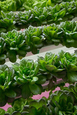 Vertical Farming On the Up and Up