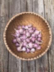 Maine Garlic