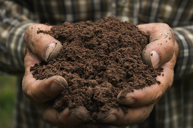 10 Things You Didn't Know About Soil