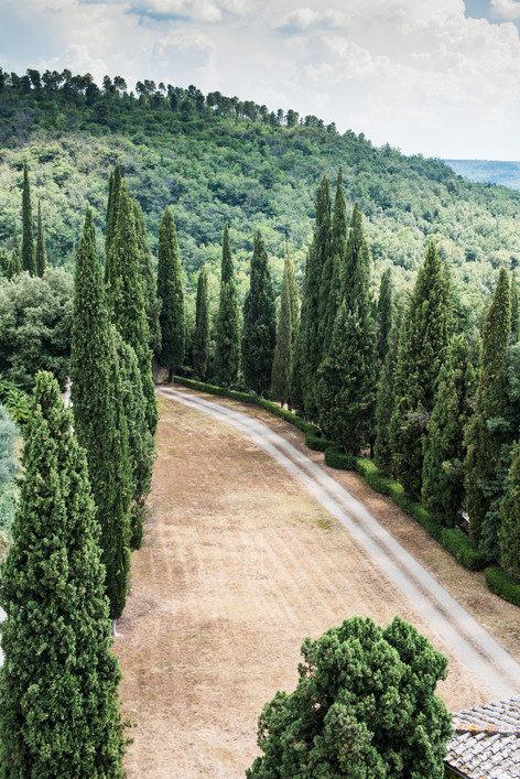 Cyrus trees and mountains surround one of the  roads leading up to the Villa at Spannocchia