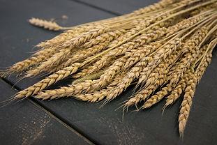 Maine Grain Alliance