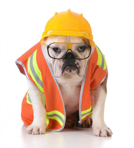 construction dog.jpg