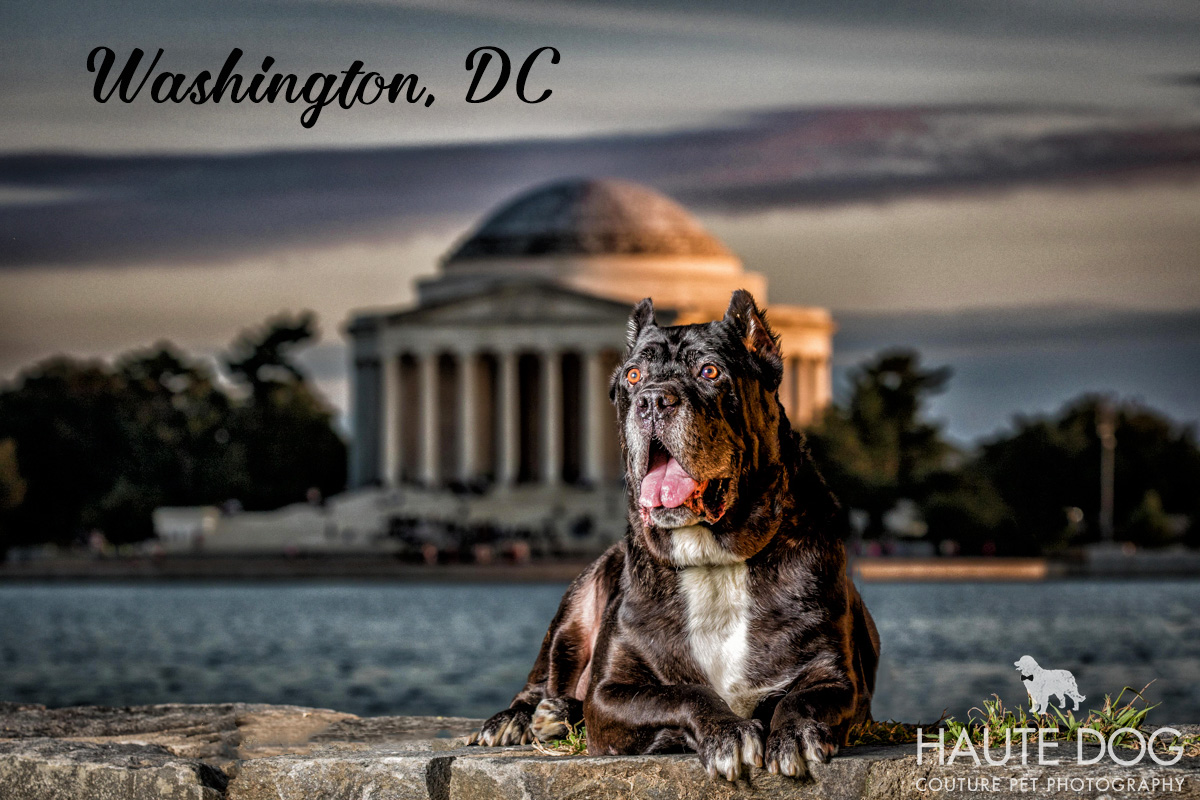 Dallas pet photography Washington DC