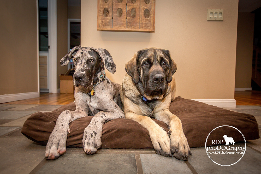 © RDP PhoDOGraphy | San Diego Dog Photographer