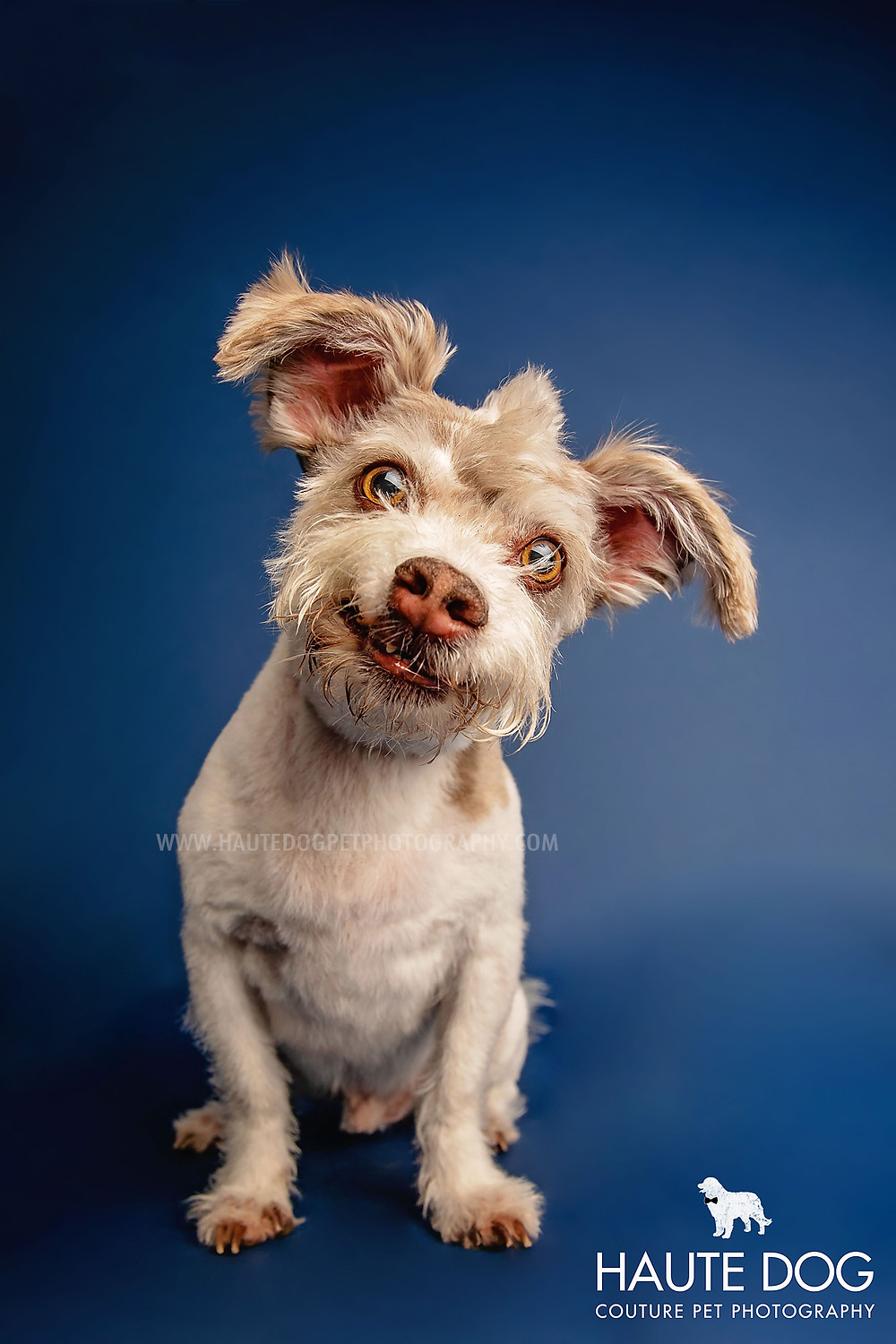 Dallas pet photographer head tilt smiling dog