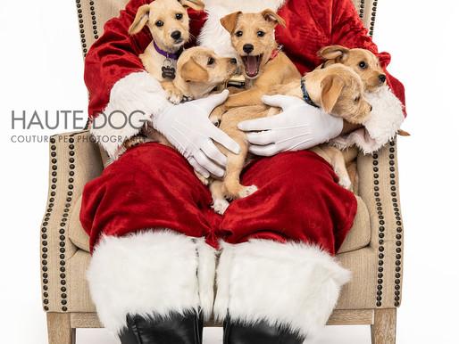 Santa?! I KNOW HIM!!! | Adoptable Dallas Doodles Meet Santa Claus