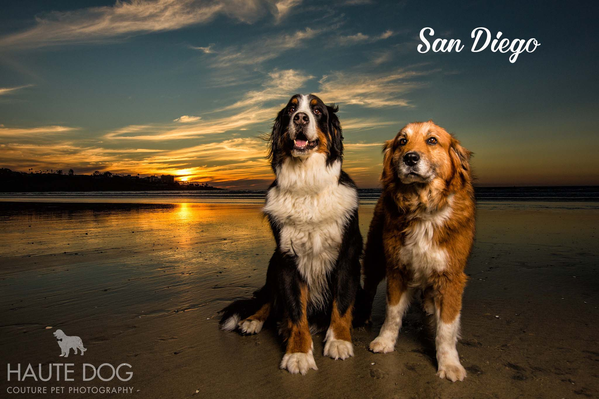 Bernese Mountain Dog San Diego beach