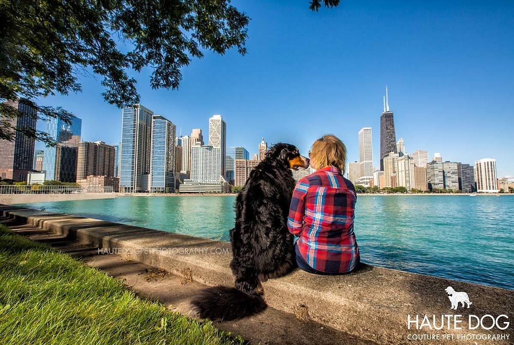 Dallas dog photographer Bernese Mountain Dog skyline