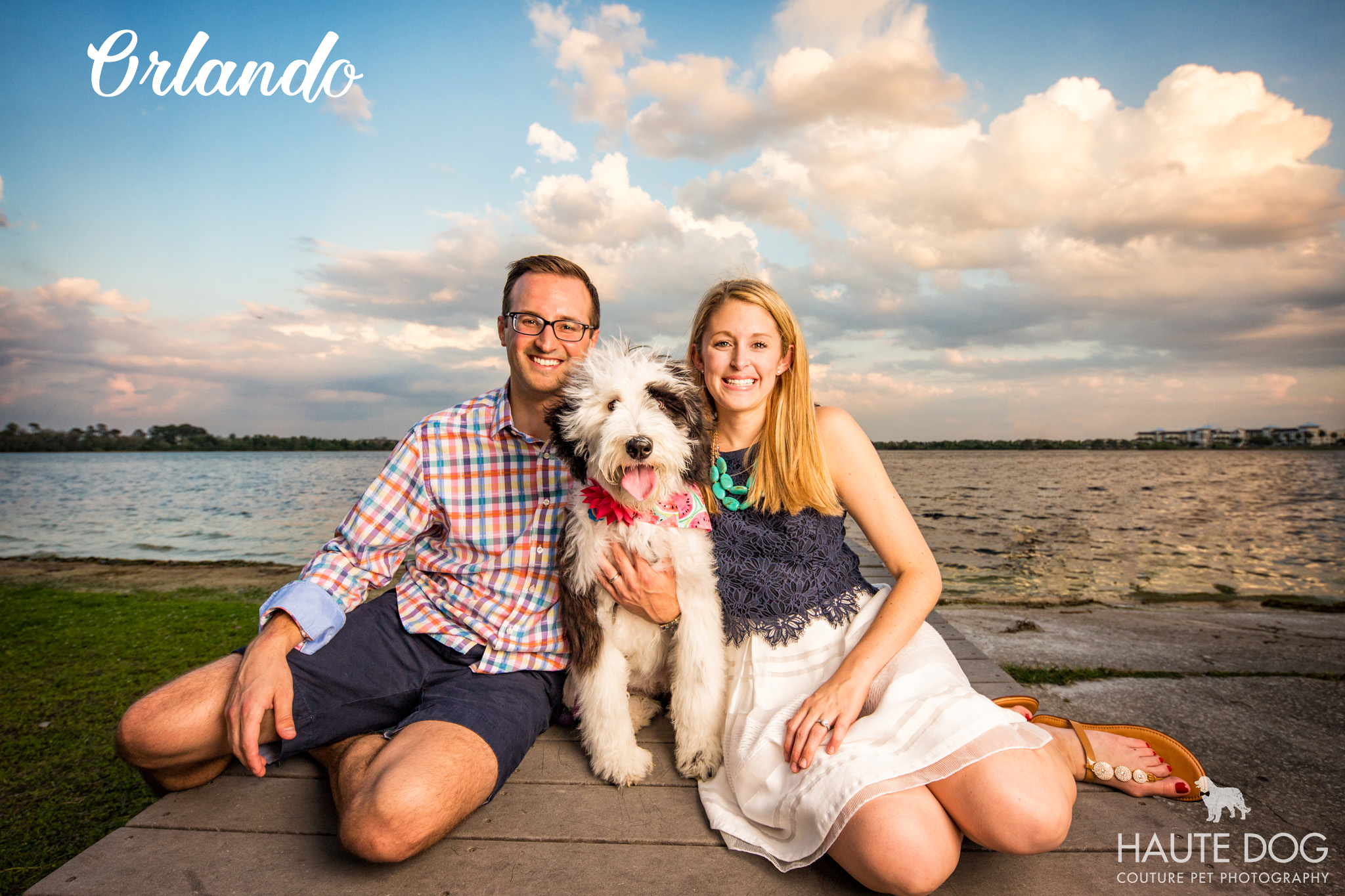 Dallas pet photographer sheepadoodle