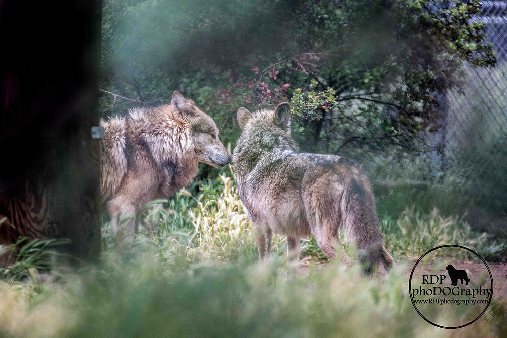 © RDP PhoDOGraphy   San Diego animal photographer