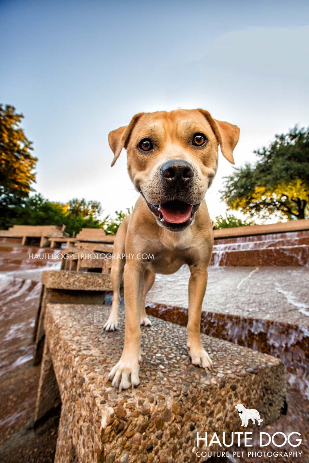 pit bull pet photography at Fort Worth Water Gardens