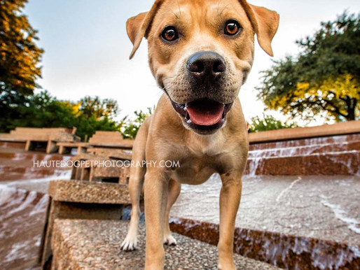 Rescue Rocky | Fort Worth Pet Photographer