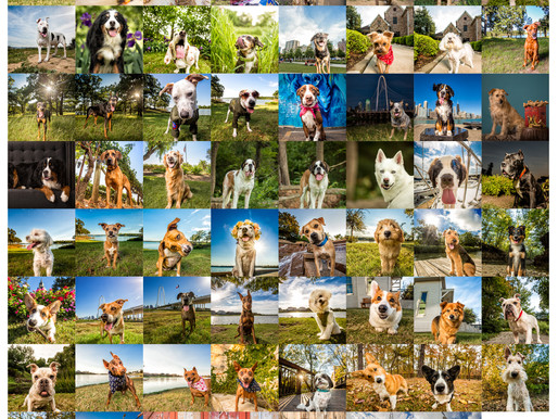 Sweet '16: An Amazing Year in Review | Dallas Pet Photography