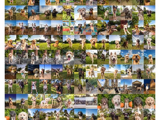 Around the World in 365 Days: Haute Dog's 2017 Year in Review