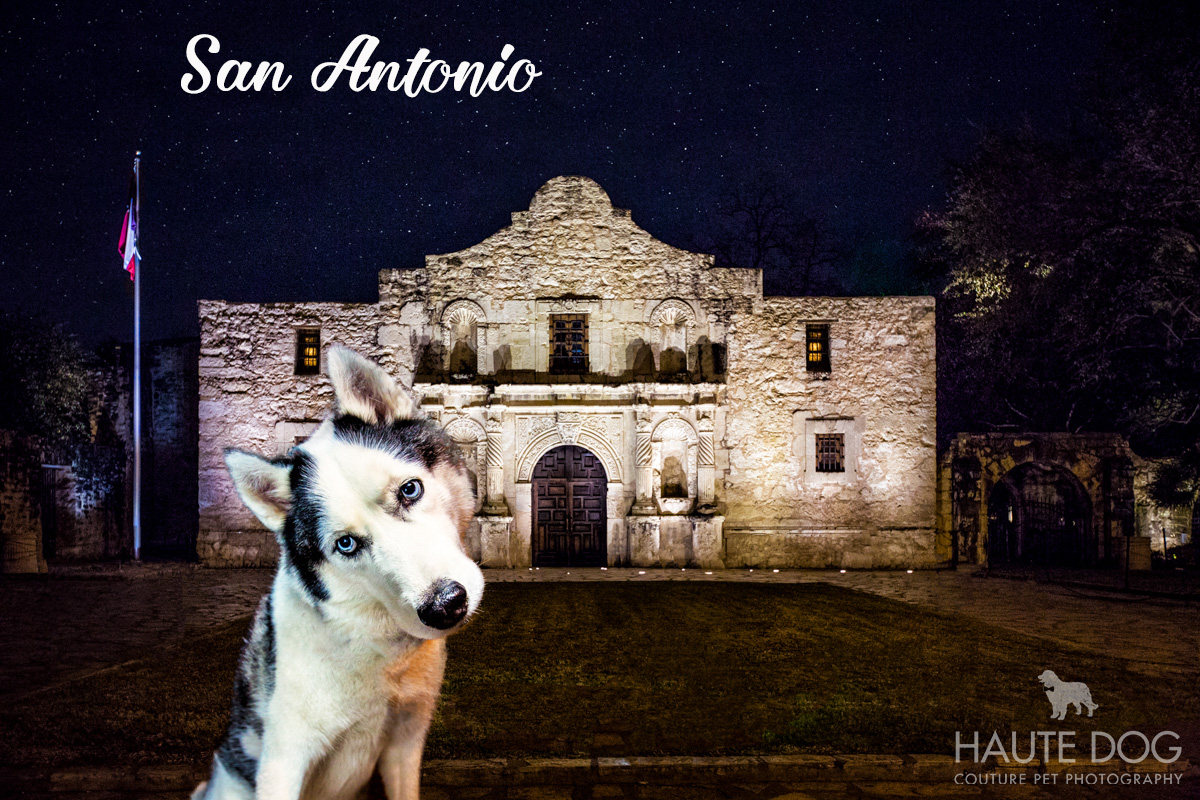 Dallas pet photographer at the Alamo