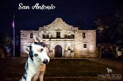 Dallas pet photographer at the Alamo