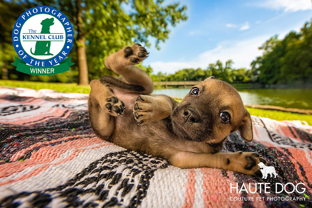 Dallas pet photographer wins Dog Photographer of the Year for doodle puppy