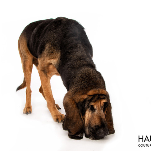 National Missing Persons Day ~ Texas Bloodhound Trailing Dogs