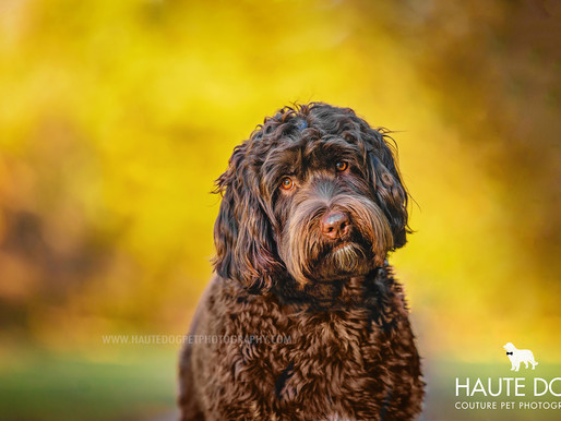 Dallas' Couture Pet Photographer | PANTONE 2021 Color of the Year
