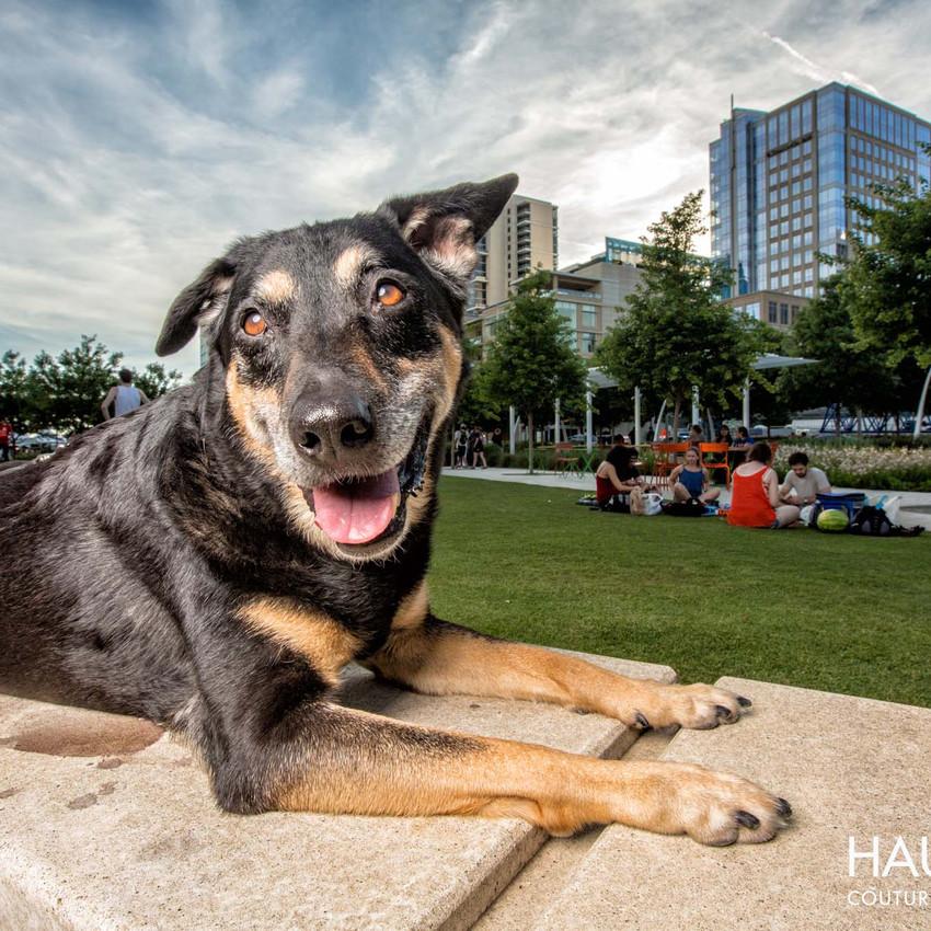 © Haute Dog: Couture Pet Photography