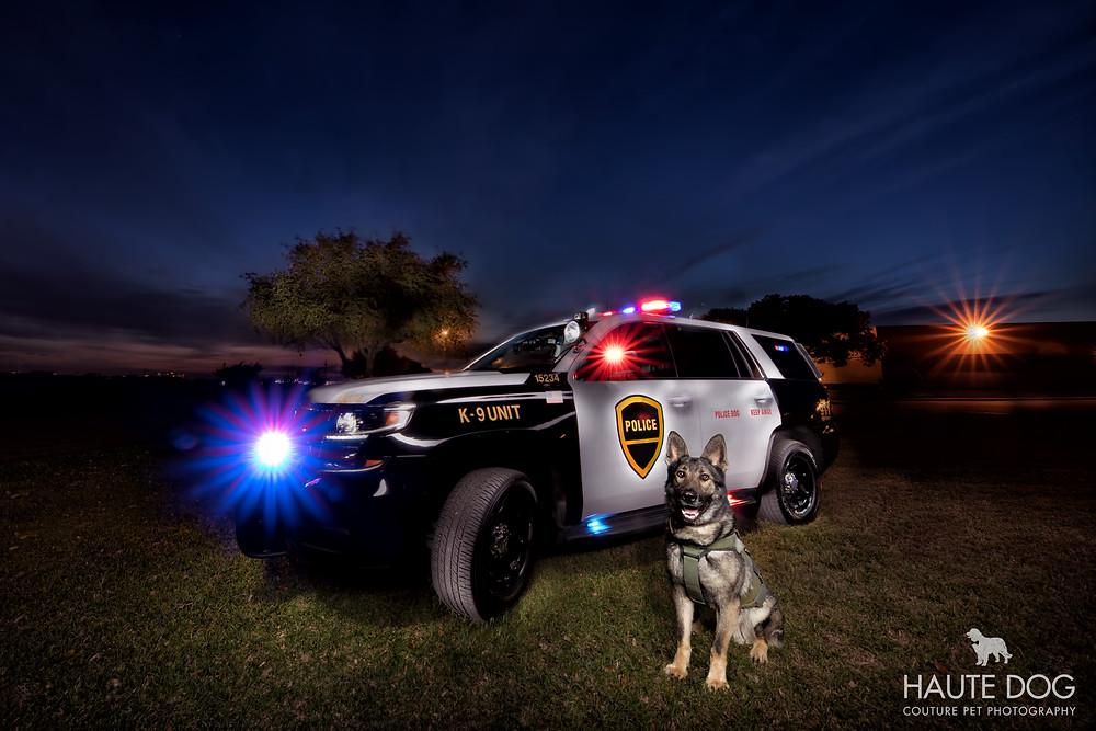 Dallas pet photographer Plano police K9 light painting German Shepherd