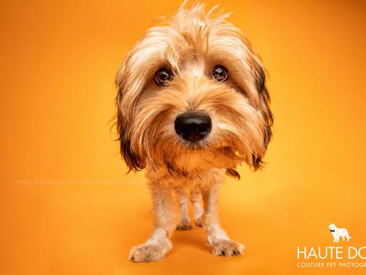 PRESS RELEASE: Grand Opening of Haute Dog Studio at Fursailles