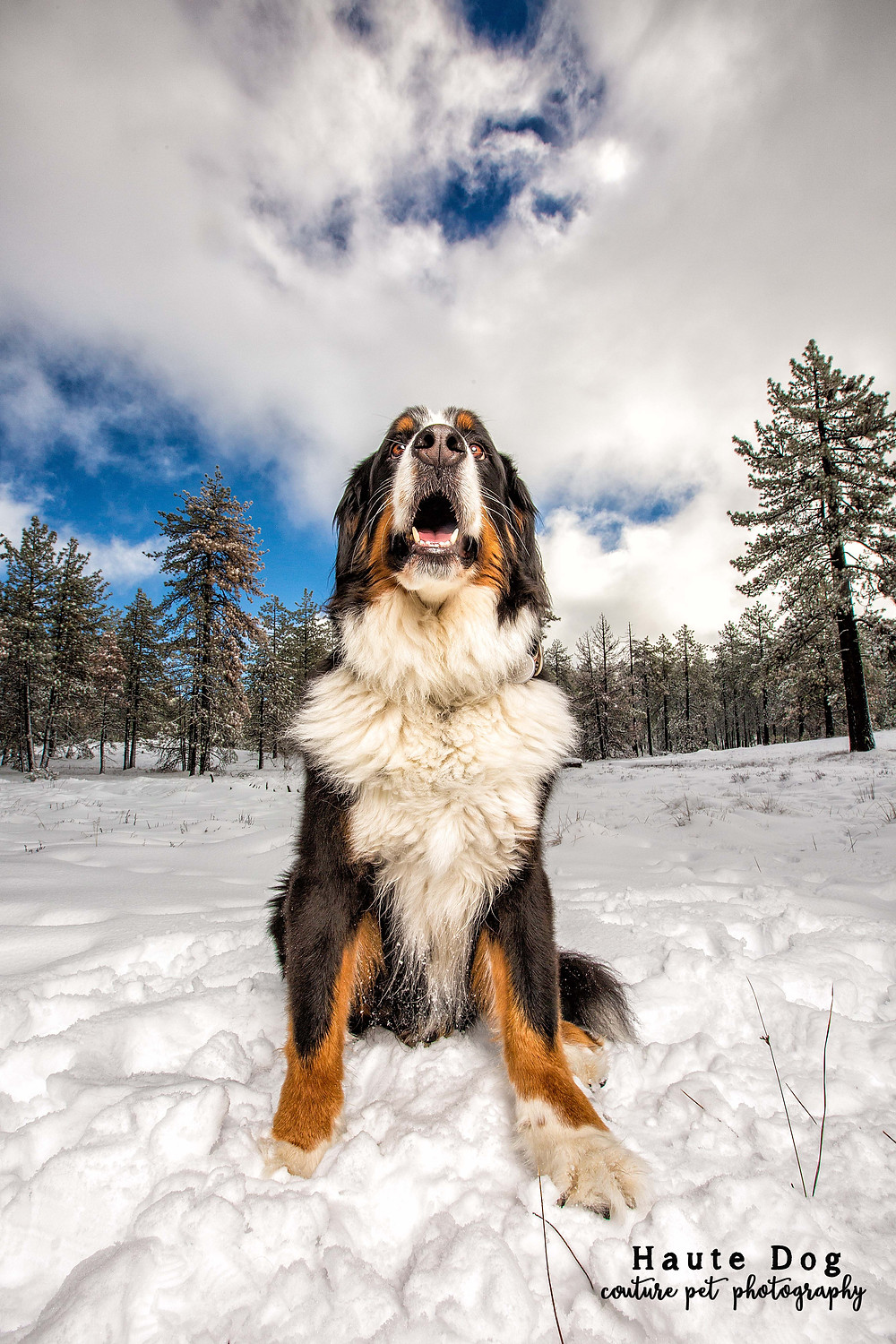 Dogs in Mt. Laguna snow | San Diego Dog Photography