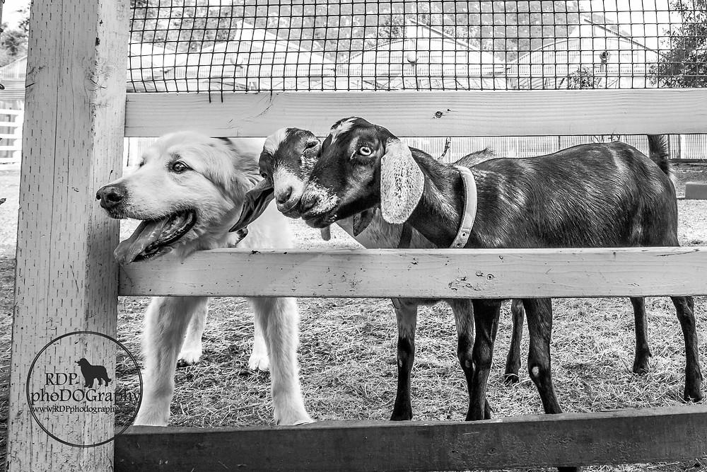 © RDP PhoDOGraphy   San Diego Pet Photographer