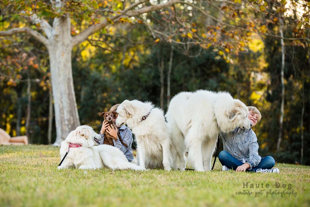 Great Pyrenees with kids | pet photographer