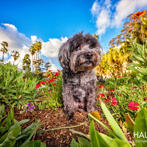 We Like Big Mutts and We Cannot Lie | Celebrating the Diversity of Dogs