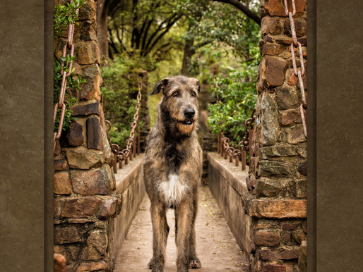 PRESS RELEASE: Dallas Pet Photographer Named Silver Medalist at 2017 International Photographic Comp