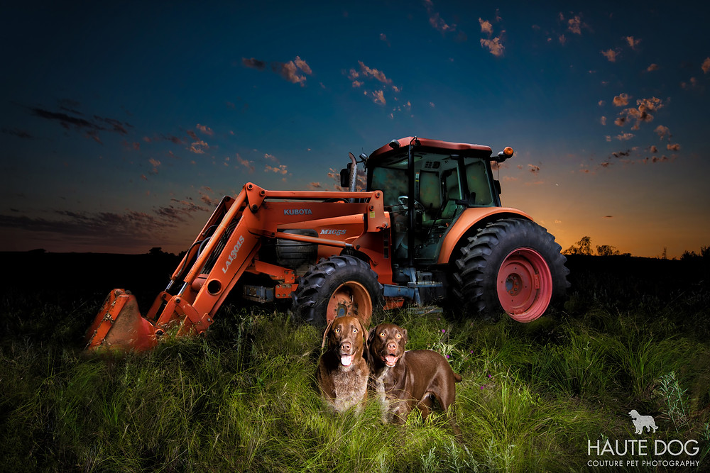 Dallas pet photographer light painting tractor German Shorthaired Pointer Lab dogs