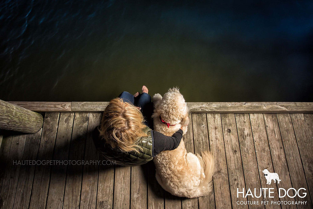 Dallas pet photographer goldendoodle at White Rock Lake dock