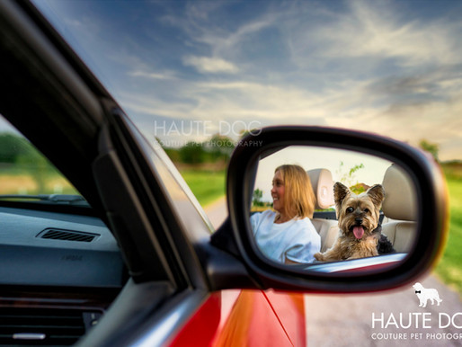 8 Ways to Accessorize Your Dog Photography Session
