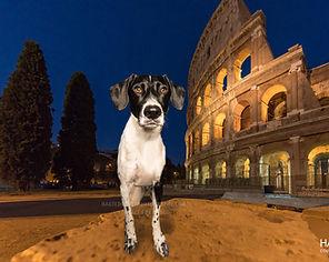 international destination pet photography - dog at the Colosseum