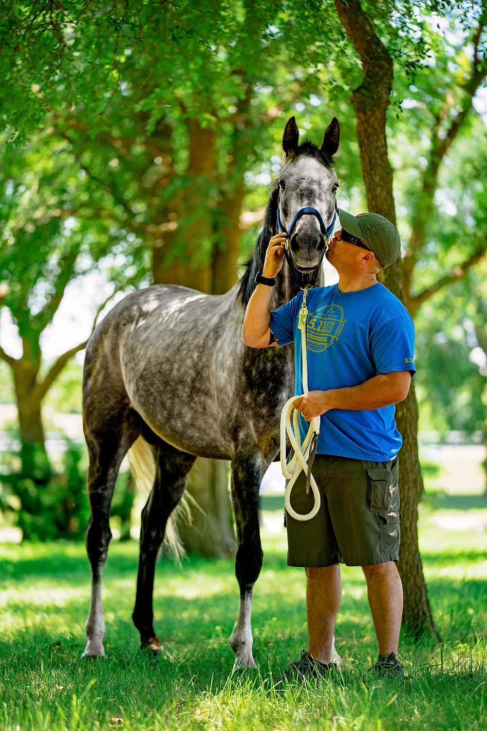 dapple gray thoroughbred horse | Dallas equestrian photography
