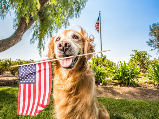 4 Safety Tips for Your Dog on the 4th of July